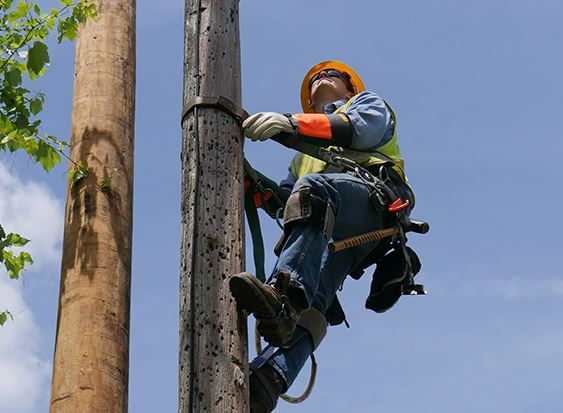 a linesman climbing up a telephone pole